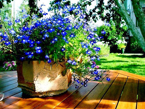 Варианты украшения дачного участка цветами