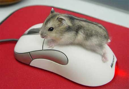 Ремонт компьютерных мышек, компьютерные мышки